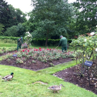 英国式庭園めぐり@クイーン・メアリー・ローズガーデン