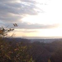 今年初の鎌倉山歩き