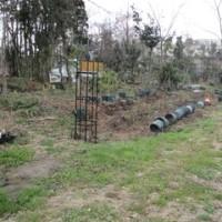 耕作放棄地からバラ園へ 1017.3.29