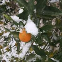 雪〜(。-_-。)