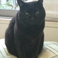 黒猫くるみちゃんのDo-up写真