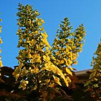 『季節の花』 柏葉紫陽花
