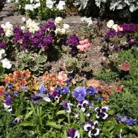 街角の花壇 - (5)