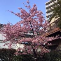 春でぇむん【日暮里校】