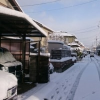またまた積雪ですね