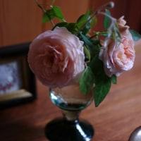 大好きな薔薇、「アブラハムダービー」
