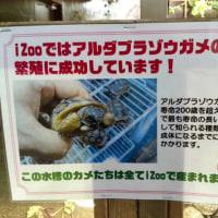 iZOO見て!ふれて!おどろく!体感型動物園(//∇//)ゾウガメ♪