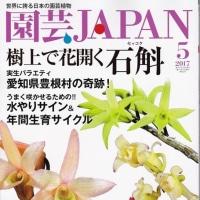 春蘭展速報! 園芸JAPAN5月号発売開始!!