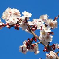 早春の花散歩2