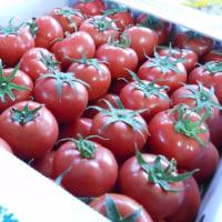 「北九州若松水切りトマト」