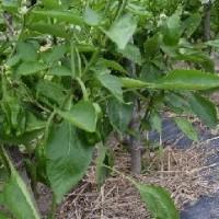 頂野菜と収穫野菜