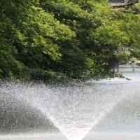 井の頭公園散歩です