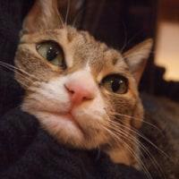 明日からシャレオ&今日は猫の日