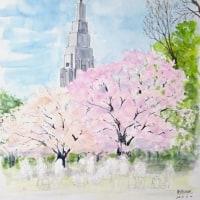 満開の桜を満喫した新宿御苑のスケッチです