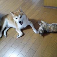 虎太郎とリンは仲良しです!!