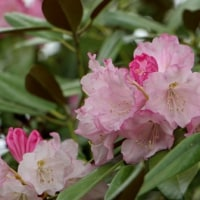 シロヤマブキやフジの花が・神代植物公園・植物多様性センター