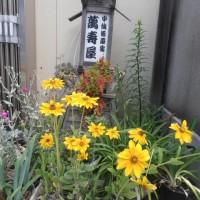 スポコミ・カワラ版 6月24日(土)大安