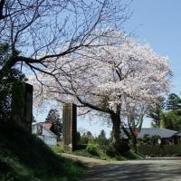 旧君原尋常高等小学校正門横の桜満開