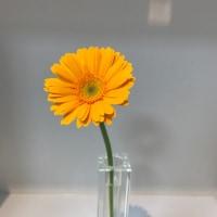 今週のお花とHBD!