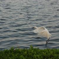 湖畔の情景
