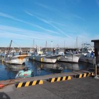 久しぶりに大磯漁港へ  漁港の食堂「めしや」で昼食