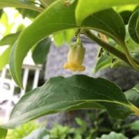 柿のゆりかご 詩