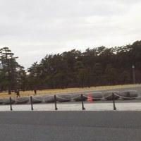 今年に入ってから皇居廻りのジョギンガーが急増・・・東京マラソン