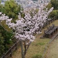 神社山の桜