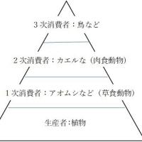 自然農法(2)