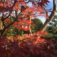 紅葉がキレイ