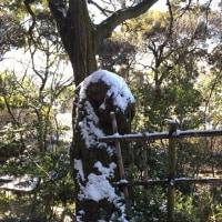 今冬初の雪景色 大吉山へ