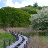 この道は、ズミの花咲く道。