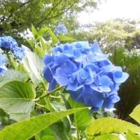 雨の似合う植物たち その3