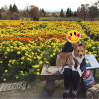 2015年秋 くじゅう花公園