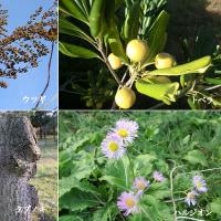 椨の木と春紫苑と
