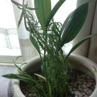 水生植物に挑戦!