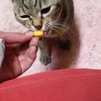 猫毬セミオーダーのカットソー
