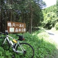 花のサイクリング-1
