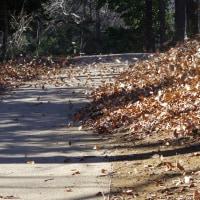 木の葉の舞い