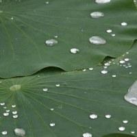 ハスの葉に似せた商品開発(バイオミミクリー)