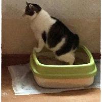 猫トイレ掃除