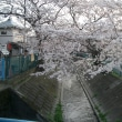 桜三昧2010