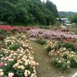 山形村山市の東沢バラ公園に火曜日に行ってきました。