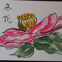 絵手紙 ほうれん草と山茶花