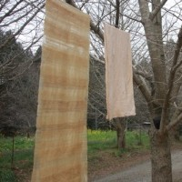 森の草木染め展&山桜ワークショップ 始まっています [空想の森の草木染め<65>]
