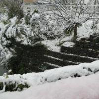 11月の初雪
