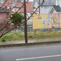 柴田町議会議員一般選挙