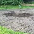 イノシシが田畑を耕す⁉️ 被害を目の当たりにすると心が痛みます。耕作放棄地はイノシシにとって楽園⁉️