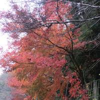 家の周りの紅葉