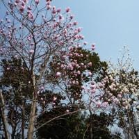 3月の上海へ ・・風情ある思南路・周公館付近(№3)